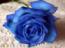 avatar_jayanthi mandhalapu