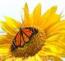 avatar_LonzFist